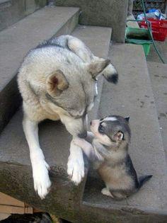 Mamma e cucciolo