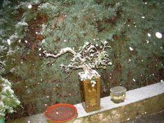 nieva sobre el quercus