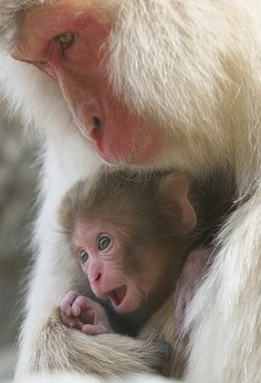 Mother & Sweet Baby - love the baby's expression! :)