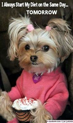 Oh my gosh, this dog is probably the cutest thing I've ever seen. I especially like the pony tails!!