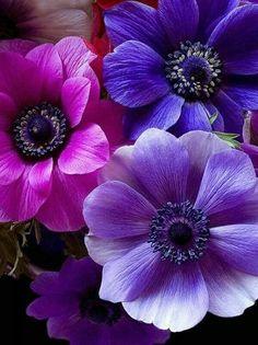 Beautiful colors :-)