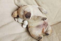 Puppies sleeping with stuffed animals - cute puppies photo Cute Puppy Pictures, Dog Pictures, Animal Pictures, Puppy Images, Baby Animals, Funny Animals, Cute Animals, Cute Puppies, Cute Dogs