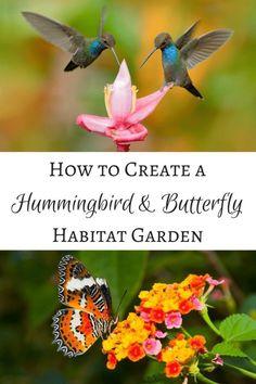 Create a hummingbird