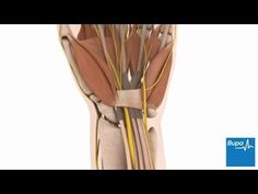Carpal tunnel release surgery