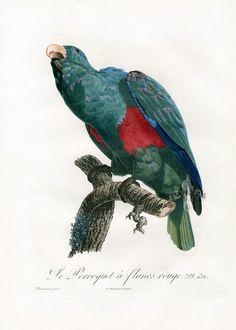 Parrot Prints