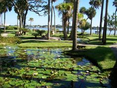 Information about Ames Park Florida Springs, Ormond Beach, The Little Prince, Florida Travel, Granada, Golf Courses, River, Park, Outdoor Decor