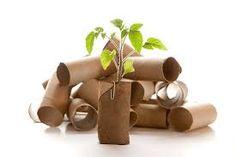 { seedlings in toilet rolls }