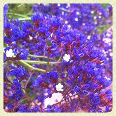 Streamzoo photo - Spring Flowers