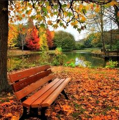 Beautiful autumn, peaceful fall leaves color the floor around this park bench by the still lake that reflects the trees. #DdO:) - https://www.pinterest.com/DianaDeeOsborne/restful-places/ - This could go onto my GREAT PHOTO COMPOSITION board: Using a tree branch in the foreground gives depth perception. Notice the dark trunk on the left creates a natural frame that draws your eye to center of picture. SOURCE: Smart Beautiful Pictures on #Facebook.