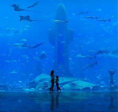 the Ambassador Lagoon is a window into the wonders of the ocean, and the centre-piece of Atlantis Hotel in Dubai, with over 250 species of fish and sea creatures. Dubai Hotel, Atlantis Hotel Dubai, Hotel Subaquático, Dubai Uae, Dubai Trip, Dubai Golf, Dubai City, Vacation Destinations, Dream Vacations