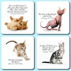 Selection of popular British domestic cats imprinted onto genuine, pulpwood beer mats. These beer mats are square with rounded corners. Beer Mats, Domestic Cat, Dog Cat, British, Popular, Cats, Nature, Prints, Animals