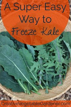 an easy way to freeze kale - Can I Freeze Kale