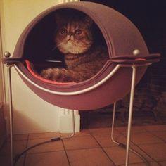 Hepper Pod Cat Bed   Spotted on @Kelly Teske Goldsworthy Oxford