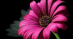 Pixabay - Obrázky zdarma