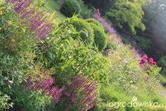Kolorowy ogród na piasku - strona 584 - Forum ogrodnicze - Ogrodowisko Vineyard, Plants, Outdoor, Outdoors, Vine Yard, Vineyard Vines, Plant, Outdoor Games, The Great Outdoors