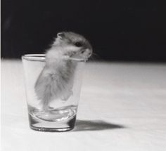 a baby hamster stuck in a shot glass