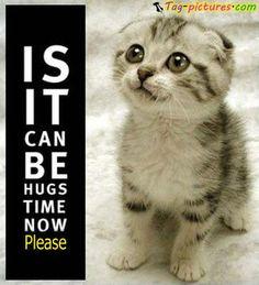 Cute Cat Quotes - Bing Images
