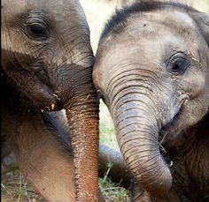 Play time with baby elephants