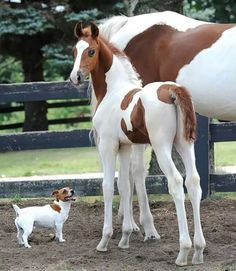 Who can resist the cuteness of baby animals? funny baby animals always make your life better. Whether you are in bad mood because of too many works at office or somebody just let you down, seeing baby animals is the best way to boost our mood. Pretty Horses, Horse Love, Beautiful Horses, Animals Beautiful, Cute Horses, Beautiful Family, Majestic Animals, Funny Animal Quotes, Cute Funny Animals