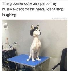 36 funny and cute animal pictures - Lustige Tiere Hund - Katzen / Cat Funny Baby Memes, Dog Quotes Funny, Funny Laugh, Funny Babies, Funny Dogs, Funny Humor, Memes Humor, Dog Humor, Funny Photos