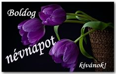 Névnap - jolka.qwqw.hu Name Day, Names, In This Moment, Plants, Saint Name Day, Plant, Planets