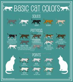 Cat Facts Text, Cat Text, Siamese Cats, Cats And Kittens, Worlds Cutest Animals, Cat Anatomy, Cat Info, Cat Pose, Cat Behavior