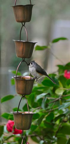 I love these rain chains where each cup  overflows into another - and apparently so do the birds!