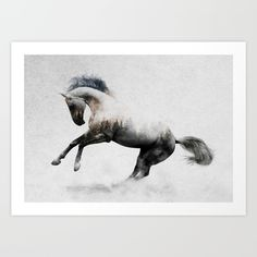 White Stallion Canvas Artwork by Andreas Lie Pretty Horses, Beautiful Horses, Animals Beautiful, Canvas Artwork, Canvas Art Prints, Framed Art Prints, Horse Artwork, Zebras, Dibujos Tattoo