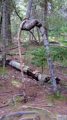 - Check more at https://www.miles-around.de/nordamerika/usa/maine/wandern-im-acadia-nationalpark/,  #Acadia #BassHarbourlighthouse #CadillacMountain #GorhamMountainTrail #IndianSummer #JordanPond #Maine #Nationalpark #Natur #Reisebericht #Thunderhole #USA #Wandern