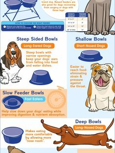 a lot of infographics - How to choose the best bowl for your dog's breed Infographic