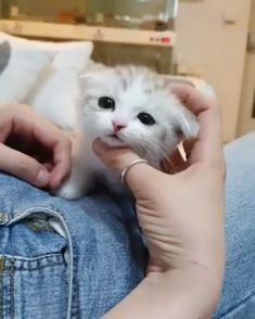 Especially with families and as service animals. Cute Funny Animals, Cute Baby Animals, Animals And Pets, Cute Cats And Kittens, Kittens Cutest, Cute Animal Videos, Cute Creatures, Beautiful Cats, Animal Memes