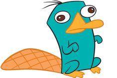 Disque amanhã, 1 de maio, é o dia do ornitorrinco.