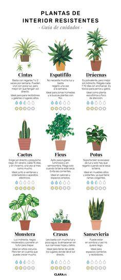 Vegetable Garden, Garden Plants, Indoor Plants, House Plants Decor, Plant Decor, Suculentas Interior, Plantas Indoor, Plante Carnivore, Plants Are Friends