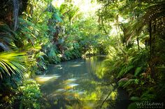 A gorgeous shot of the Cascades Walking Trail in the Waitakeres by those talented folk at Williams Photography.