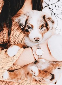 I just want an Aussie! There so sweet!