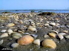 Isola Qeshm - Golfo Persico  Iran
