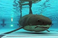 My irrational childhood fear.....Especially at the beach.