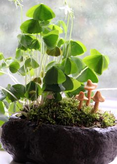 Trying to catch a leprechaun at your house too? Complete with darling little toadstools, moss and clover this leprechaun garden might just do the trick! Container Gardening, Gardening Tips, Indoor Gardening, Terrariums, Glass Terrarium, Garden Pictures, Fairy Houses, Garden Houses, Leprechaun