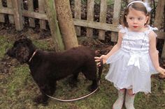 Mungo & Maud Dog Lead