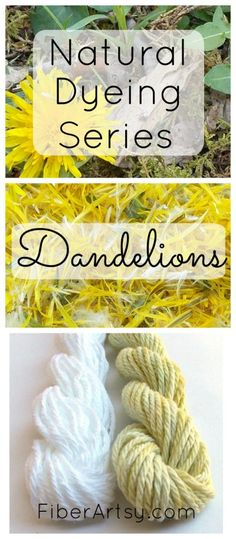 Dye Yarn with Dandelions! Why not dye your own beautiful yarn to knit and crochet? Learn to dye yarn, fiber and fabric naturally with this series of dyeing tutorials. Other natural dyeing tutorials include Dyeing with Black Walnuts and Dyeing Yarn with Bl Tie Dye Tutorial, Natural Dye Fabric, Natural Dyeing, Shibori, Batik Shirt, Fabric Dyeing Techniques, Fibre And Fabric, Dandelion Flower, Dandelion Plant