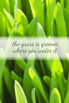 Jouer au Loto et au Keno – Passion Keno Iphone Backgrounds, Phone Wallpapers, Gods Promises, Background Pictures, Lovely Things, Grass, Fonts, Gadgets, Inspired