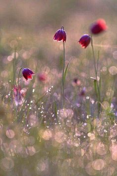 by Sergii Markov Beautiful Flowers Wallpapers, Beautiful Nature Wallpaper, Flower Backgrounds, Flower Wallpaper, Flower Pictures, Pretty Pictures, Pretty Flowers, Wild Flowers, Deco Floral