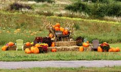 Love this field Fall display