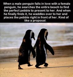 I am waiting for my penguin! This is why I love them! There such special creatures!