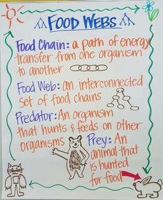 Food Webs Anchor Chart