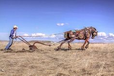 Old Farm Equipment and Scrap Metal Turned into Art | You Got to be Kidding's Blog