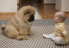 Cute overload...chow chow and baby! :)