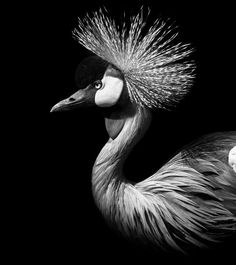Moodboard - Celebrating the mesmerizing beauty of black and white - animals Wildlife Photography, Creative Photography, Animal Photography, Planets Wallpaper, Star Wallpaper, Black And White Portraits, Black And White Pictures, Elefant Wallpaper, Web Animal
