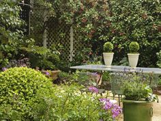 trellis along fence, with outdoor dining furniture and ceramic vases with evergreen plants