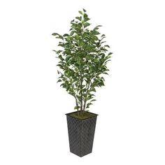 House of Silk Flowers Ficus Tree in Planter Leaves Color: Variegated